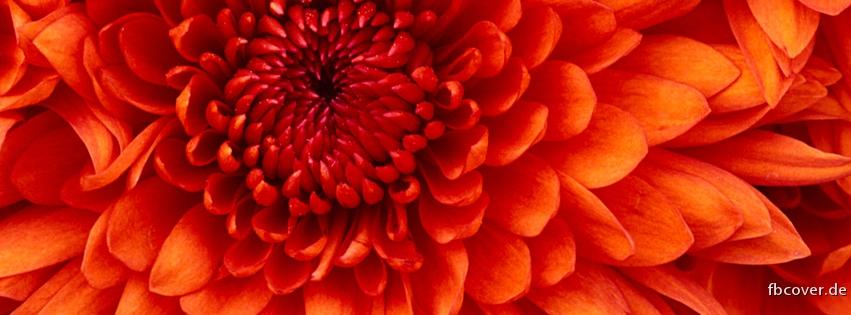 Red Flower - Red Flower