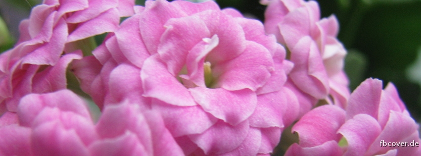 flowers - Beautiful flowers