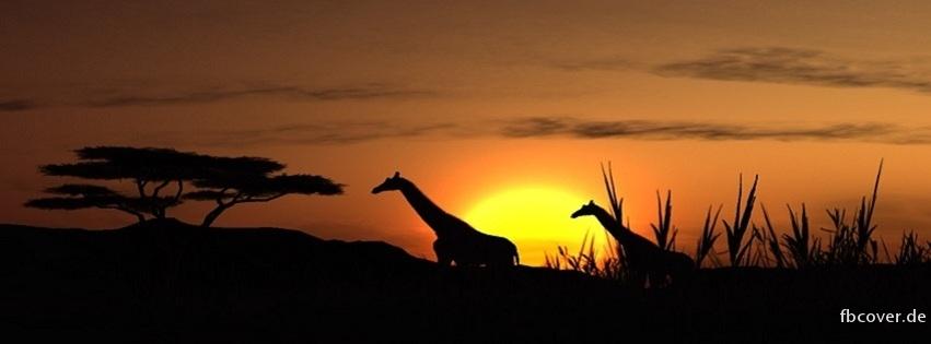 Giraffe and Sunset - Giraffe and Sunset