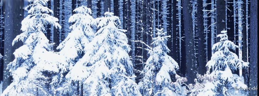 Winter Snow - Winter Snow Trees