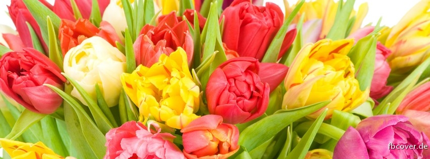 Colorful tulips - Colorful flowers