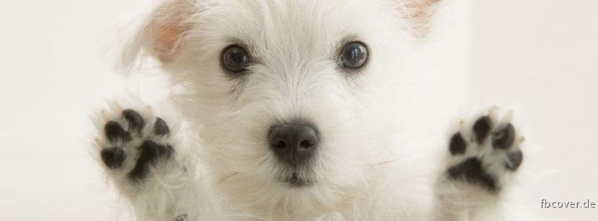Sweet Dog - Sweet Dog