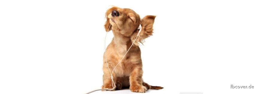 Dog & Music -