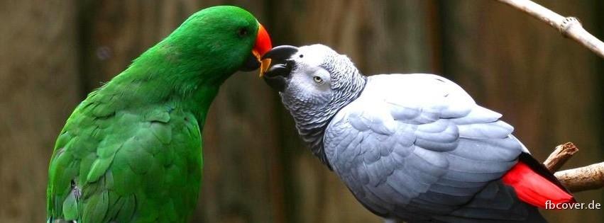 Parrot Love - Parrot Love