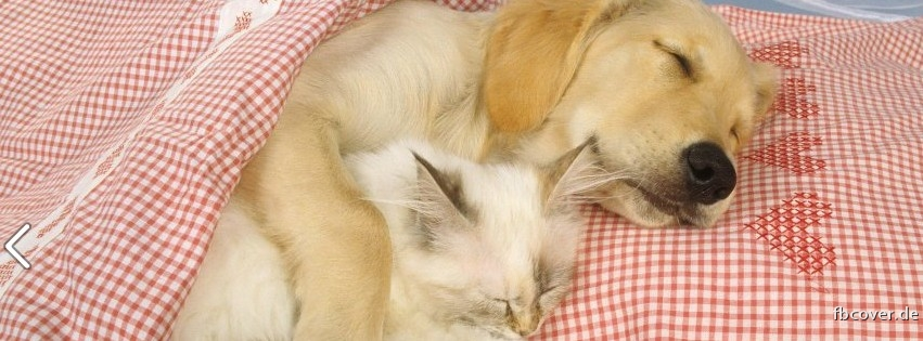 Sleeping Dogs and Cats - Sleeping Dogs and Cats