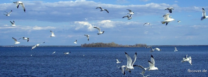Many bird and water - Many bird and water
