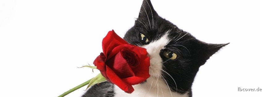Cat with Rose - Cat with Rose