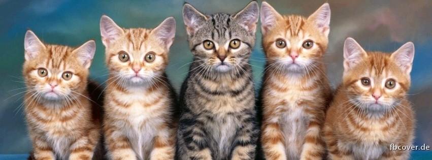 Cute cats - Cute cats