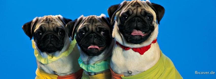 Three dogs - Three dogs