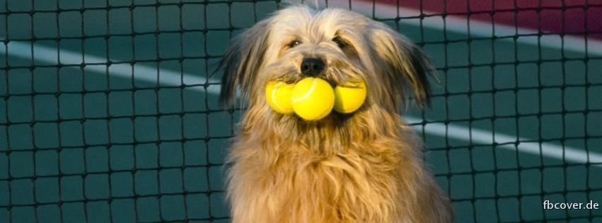 Tennis Dog - A dog with tennis balls.