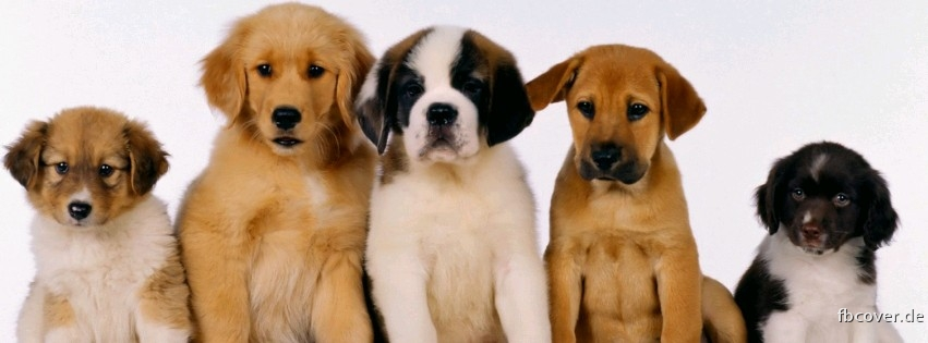 süüüße dogs - Five very cute and sweet dog that is a must see :)