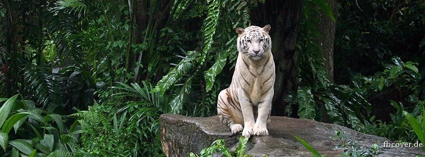 Tiger in the jungle - Animal in the jungle
