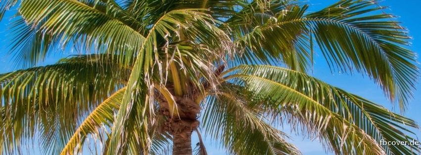 Palm Beach Paradise - Palm Beach Paradise