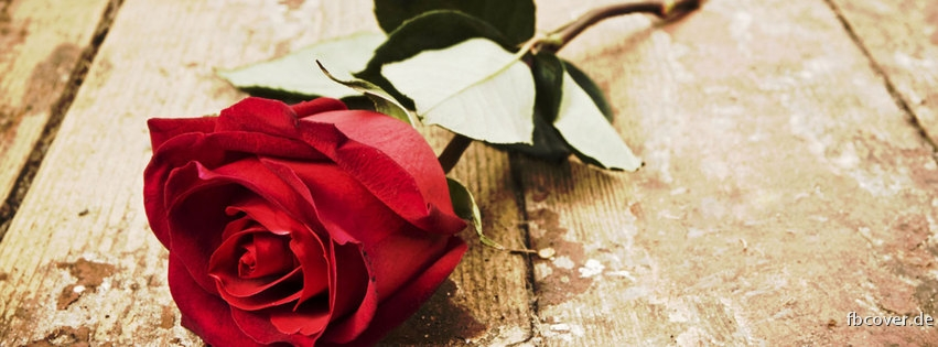The Rose -