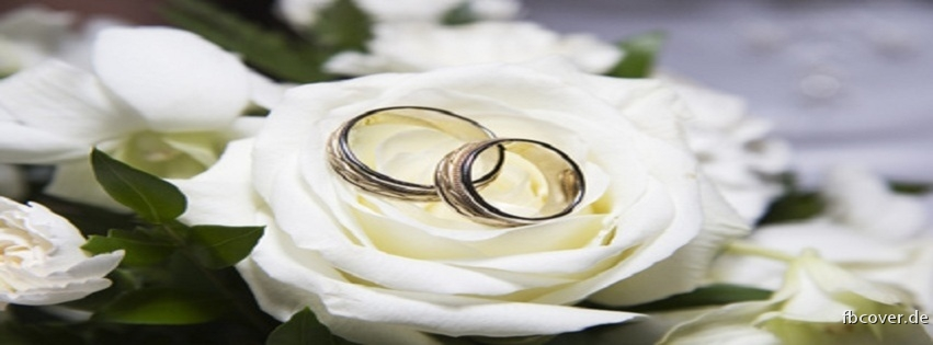 White Rose & Wedding Rings - White Rose & Wedding Rings